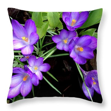 Crocus First To Bloom Throw Pillow by Tara Hutton