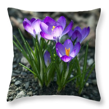 Throw Pillow featuring the photograph Crocus In Bloom #2 by Jeff Severson