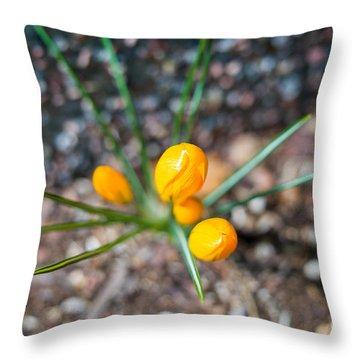 Crocus Star Throw Pillow