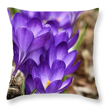 Throw Pillow featuring the photograph Crocuses by Larry Ricker