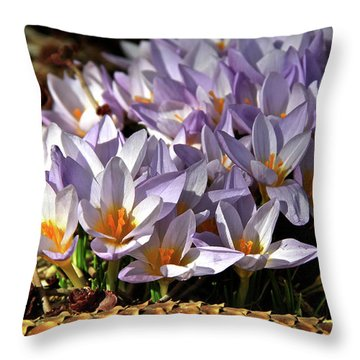 Crocuses Serenade Throw Pillow by Ed  Riche