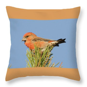 Crossbill Throw Pillow by Judd Nathan