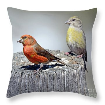 Crossbills Throw Pillow