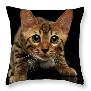 Crouching Bengal Kitty On Black  Throw Pillow by Sergey Taran