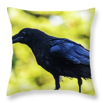 Throw Pillow featuring the photograph Crow Perched by Jonny D