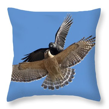 Throw Pillow featuring the photograph Crow Vs Hawk by Mircea Costina Photography