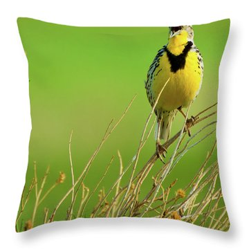 Throw Pillow featuring the photograph Crying Out II by John De Bord