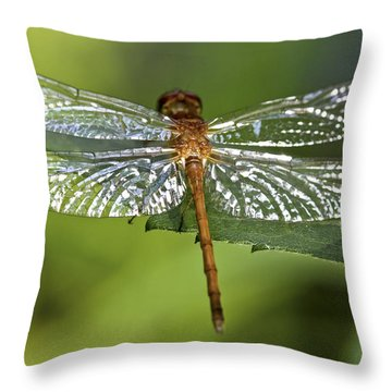 Crystal Wings Throw Pillow by Evelina Kremsdorf