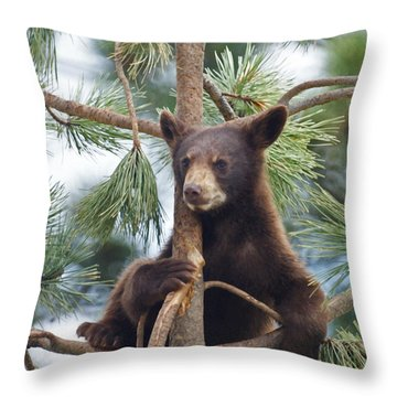 Cub In Tree Dry Brushed Throw Pillow by Ernie Echols