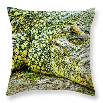 Cuban Croc Throw Pillow
