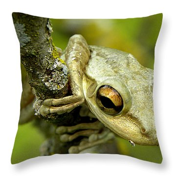 Cuban Tree Frog  Throw Pillow