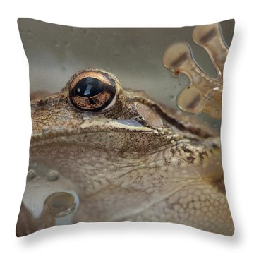 Cuban Treefrog Throw Pillow