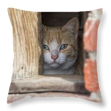 Cubby Cat Throw Pillow