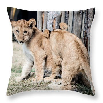 Throw Pillow featuring the photograph Cubs Playing by Cathy Donohoue