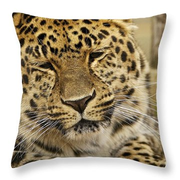 Cuddles  Throw Pillow by Gary Bridger