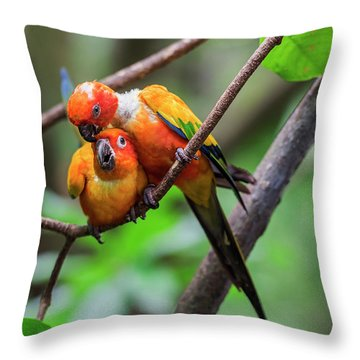 Throw Pillow featuring the photograph Cuddling Parrots by Pradeep Raja Prints
