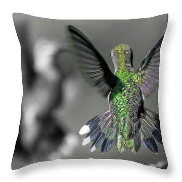 Cumberland Gap Hummingbirds Throw Pillow