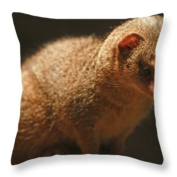 Throw Pillow featuring the photograph Curiosity At Rest by Laddie Halupa
