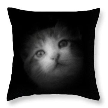 Throw Pillow featuring the photograph Curiosity by Betty Northcutt