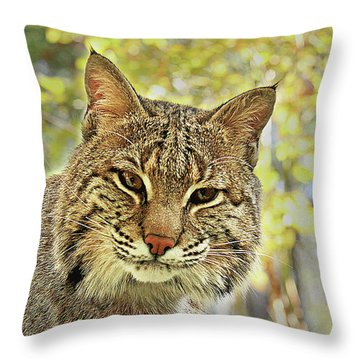 Throw Pillow featuring the photograph Curiosity The Bobcat by Jessica Brawley