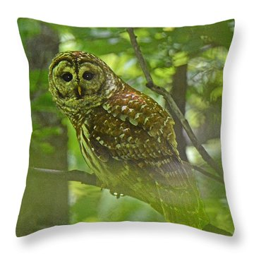 Curious Barred Owl Throw Pillow by Alan Lenk