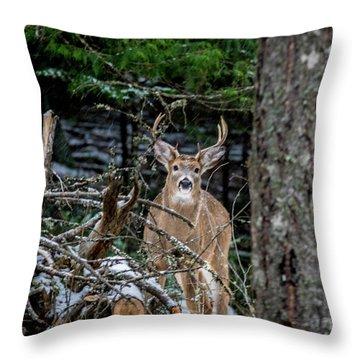 Curious Buck Throw Pillow