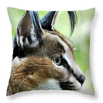 Throw Pillow featuring the photograph Curious Caracal by Howard Bagley