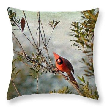 Curious Cardinal Throw Pillow