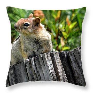 Curious Chipmunk Throw Pillow