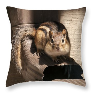 Curious Chipmunk Throw Pillow