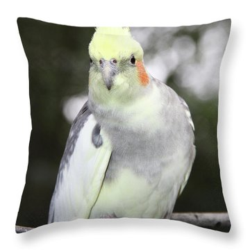 Curious Cockatiel Throw Pillow by Inspirational Photo Creations Audrey Woods