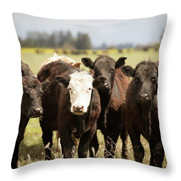 Throw Pillow featuring the photograph Curious Cows by Rebecca Cozart