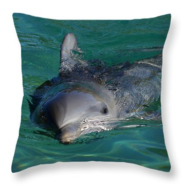 Curious Dolphin Throw Pillow