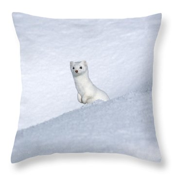 Curious Ermin Throw Pillow