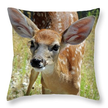 Curious Fawn Throw Pillow by Inspirational Photo Creations Audrey Woods