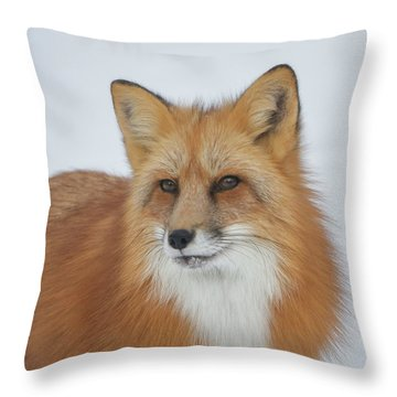 Curious Fox Throw Pillow by Jack Bell