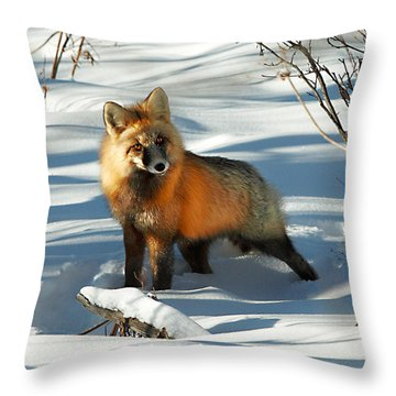 Curious Fox Throw Pillow