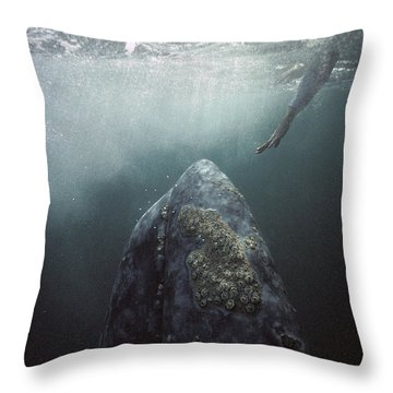 Throw Pillow featuring the photograph Curious Gray Whale And Tourist by Tui De Roy