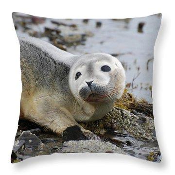 Curious Harbor Seal Pup Throw Pillow by DejaVu Designs