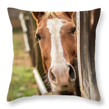 Curious Horse Throw Pillow