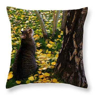 Curious  Throw Pillow