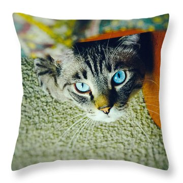 Throw Pillow featuring the photograph Curious Kitty by Silvia Ganora