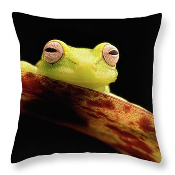 Curious Little Amazonian Tree Frog Throw Pillow
