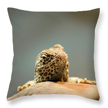Curious Lizard Throw Pillow