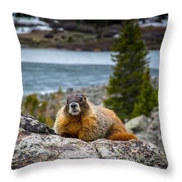 Curious Marmot Throw Pillow