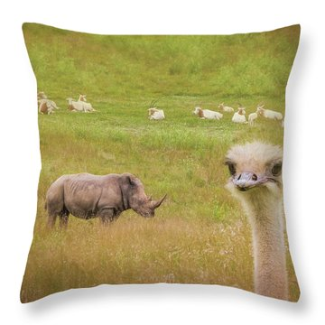 Curious Ostrich And White Rhino Throw Pillow