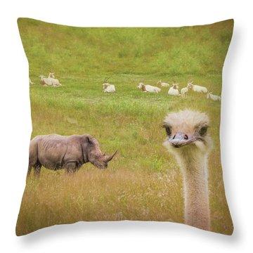 Curious Ostrich And White Rhino Throw Pillow