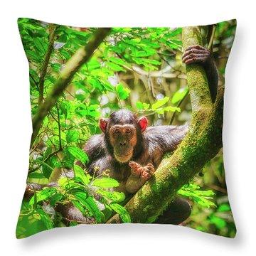 Throw Pillow featuring the photograph Curious by Rick Furmanek