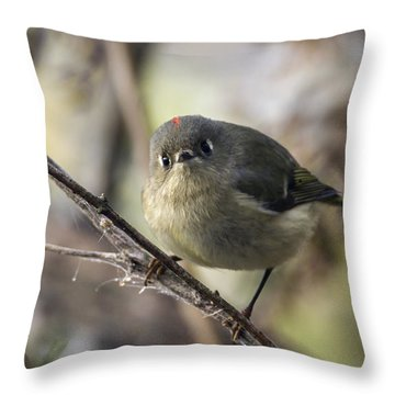Curious Ruby-crowned Kinglet Throw Pillow