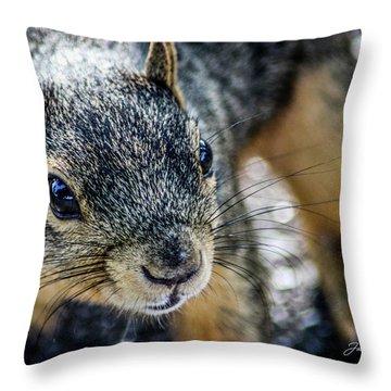 Curious Squirrel Throw Pillow by Joann Copeland-Paul